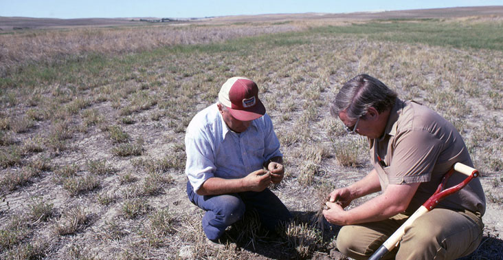 Two men examine roots of alfalfa and grass hay hit by drought in Sidney, Montana.