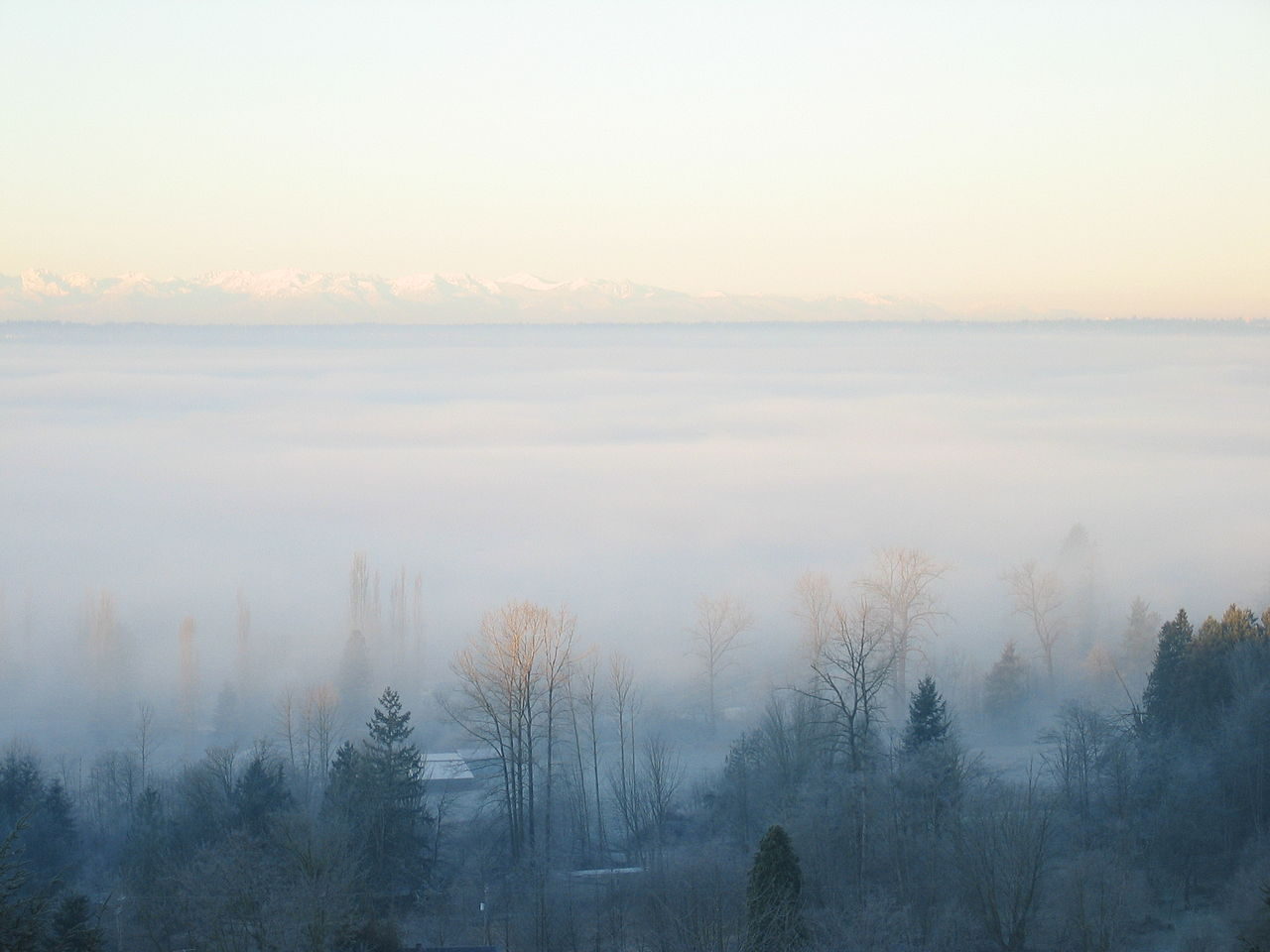 fog covers a rural area