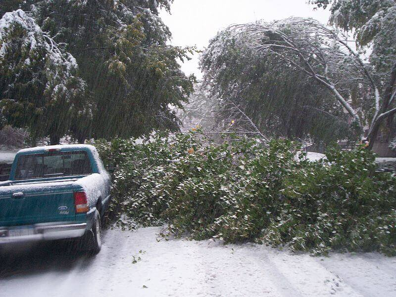 photograph of downed trees from a lake-effect snow storm.