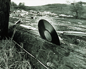 Old photo of a vinyl record embedded in the bark of a fallen tree.