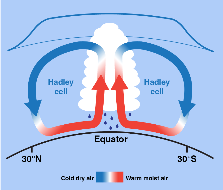 Illustration of the Hadley cell phenomenon, caused by a cycle of warm, moist air rising near the equator that eventually cools and sinks a bit further north in the tropics.