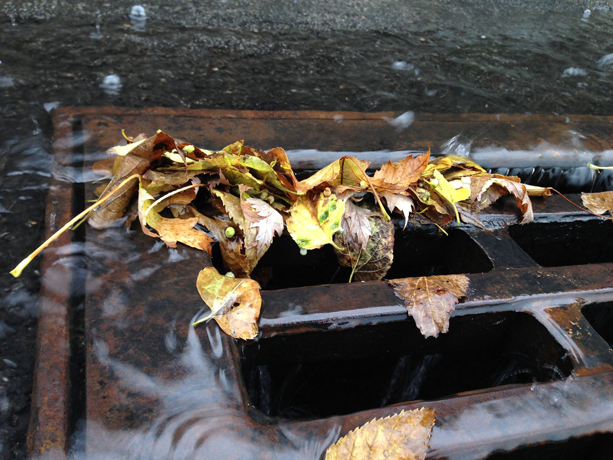 An image of a storm drain covered in leaves.